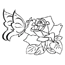 Butterfly On Rose Coloring Sheets