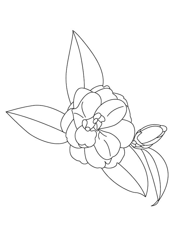The-Camellia