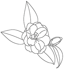 The Camellia Coloring Pages
