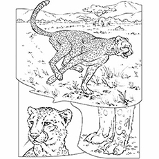 25 Best Cheetah Coloring Pages For Your Little Ones