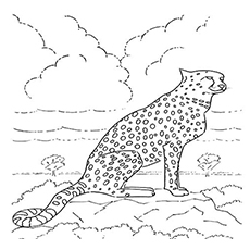 The-Cheetah-In-His-Habitat
