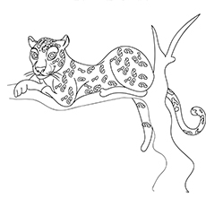 The Cheetah On The Tree