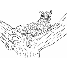 The-Cheetah-On-The-Tree