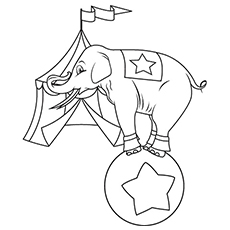 Circus Elephant Standing on Ball Doing Stunts Coloring Sheets