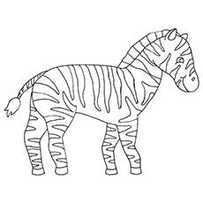 the circus zebra