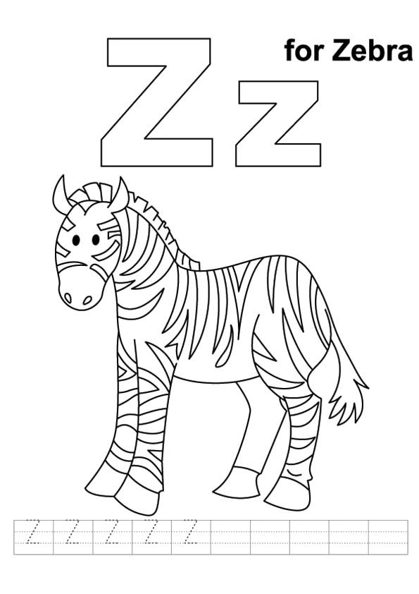 The-Cute-Baby-Zebra1