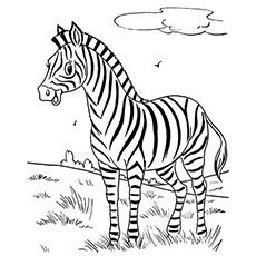 the cute zebra - Zebra Coloring Pages