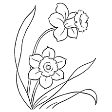 The Daffodil Coloring Pages