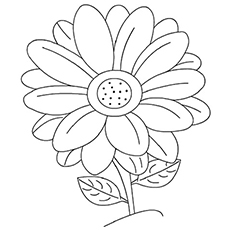 the daisy coloring pages