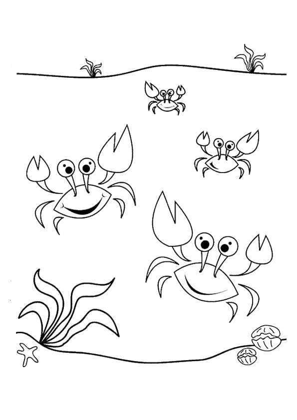 The-Dancing-Sea-Crabs