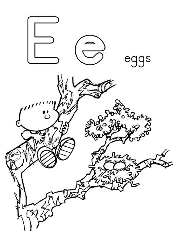 The-E-For-Egg-Nest
