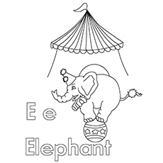 The-E-For-Elephant1-16