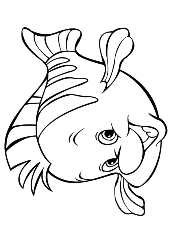 The-Flounder
