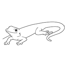 Top 10 Lizard Coloring Pages For Your Little Ones