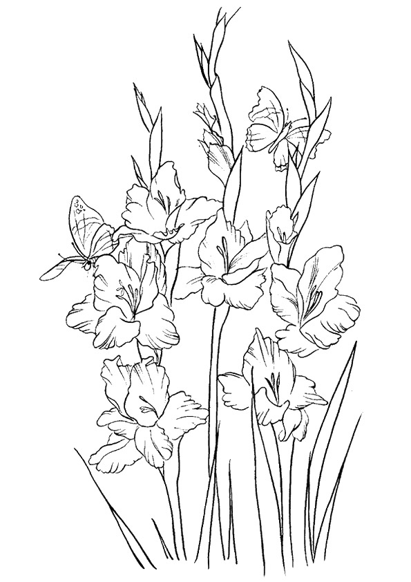 The-Gladiolus
