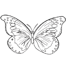 Goliath Birdwing Butterfly Coloring Pages to Print