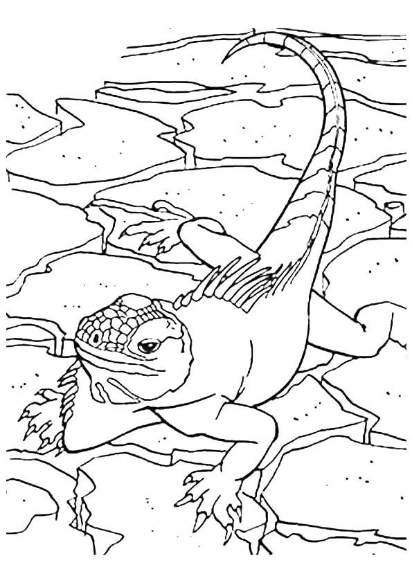 The-Green-Iguanas