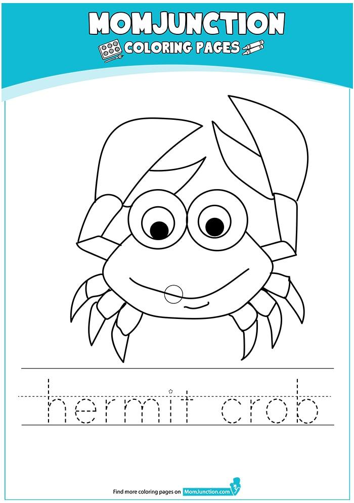 The-Happy-Hermit-Crab-16