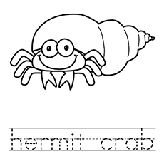 Gallery For gt Hermit Crab Coloring Sheet