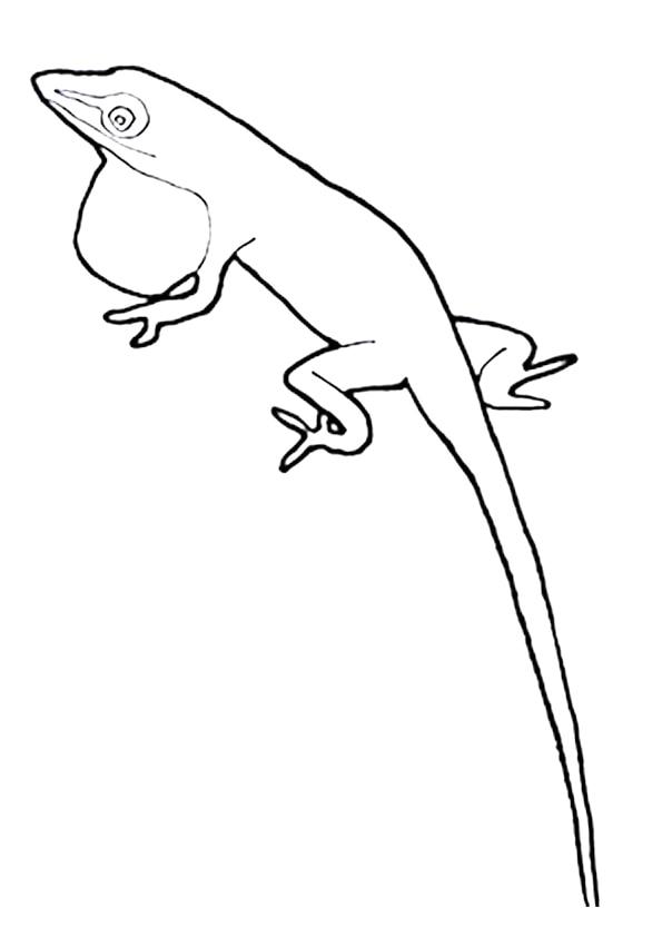 The-Iguana1