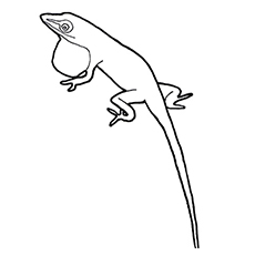 Top 10 Free Printable Lizard Coloring Pages Online