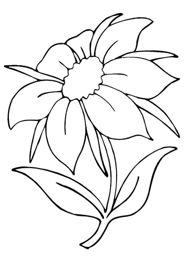The-Jasmine
