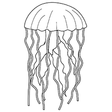 The-Jellyfish