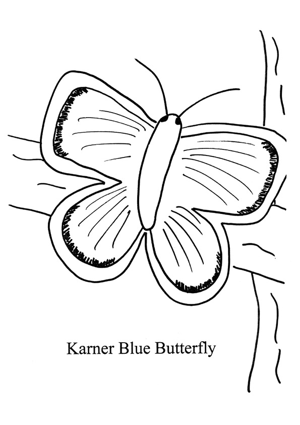 The-Karner-Blue-Butterfly