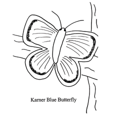 free printable karner blue butterfly coloring pages