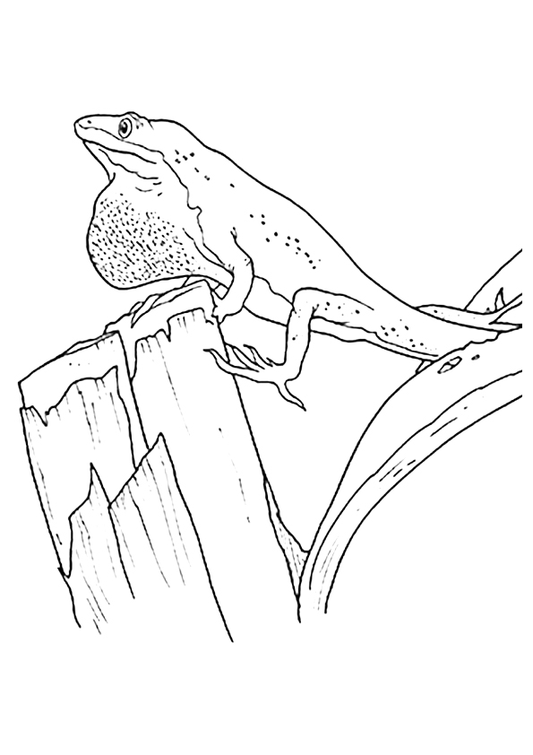 The-Lizard-With-Hanging-Skin