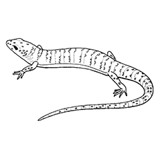 The-Lizard-With-Scales