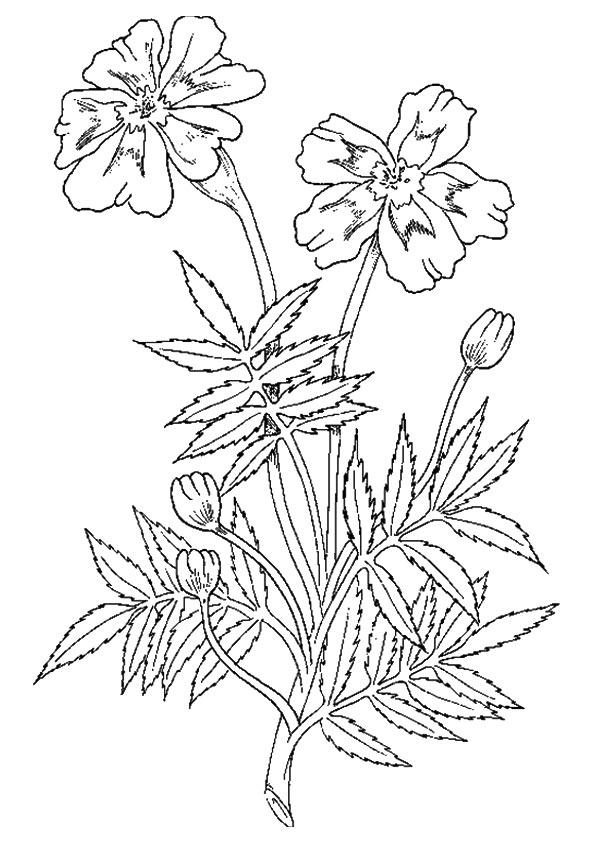 The-Marigold