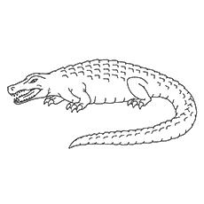 The-Mighty-Crocodile