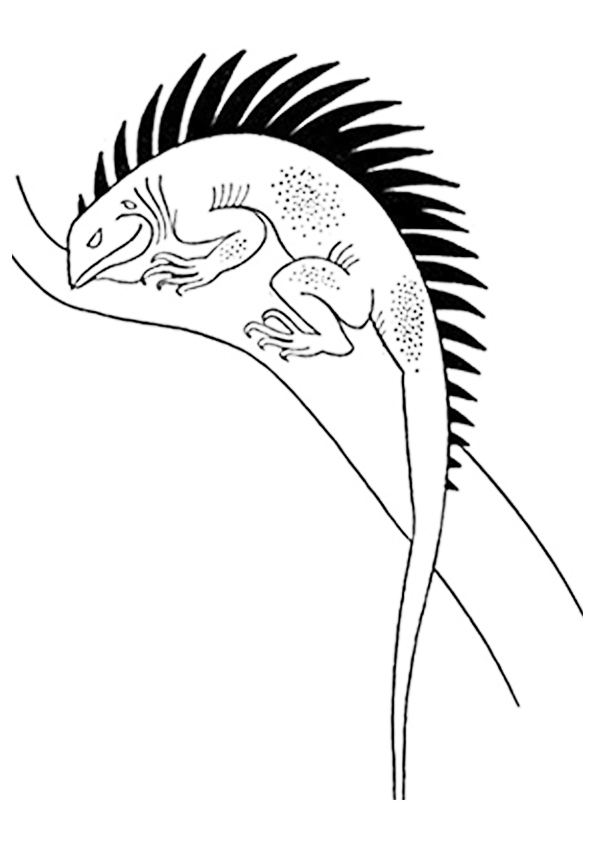 The-Monitor-Lizard