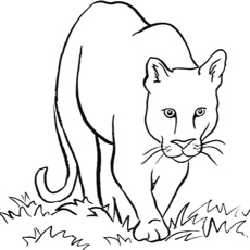 the mountain lion coloring pages - Coloring Page Lion