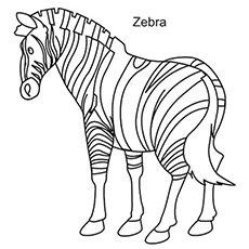 the mountain zebra - Zebra Coloring Pages