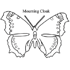 Free Coloring Pictures of Mourning Cloak Butterfly