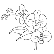 The Orchids Coloring Pages
