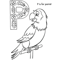 The P For Parrot