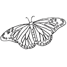 Painted Lady Butterfly Coloring Pages