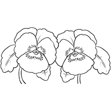 the pansy coloring pages