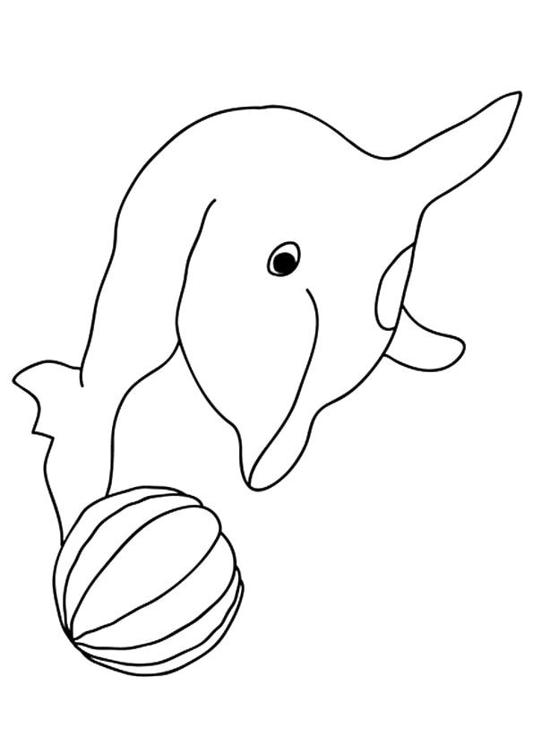 The-Porpoise