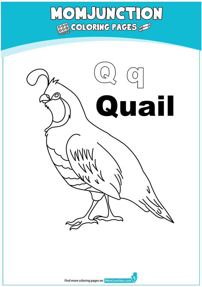The-Q-For-Quail-16