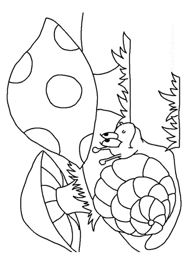 The-Snail-In-Mushroom-Land