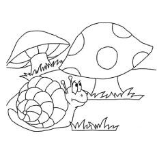 the snail in mushroom land