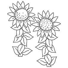 the sunflower coloring pages - Detailed Sunflower Coloring Pages