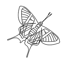 Sylphina Angel Butterfly Picture to Color