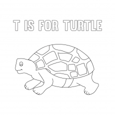 The T For Turtle