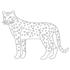 The-The-Big-Cheetah