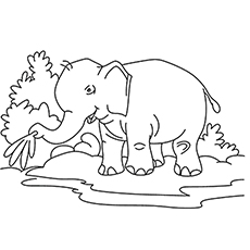 Elephant having Fun at River Bed Coloring Page to Print